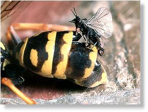 Insekten: Die Welt der kleinen Krabbeltiere: Feinde der
